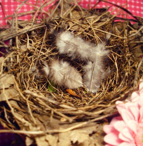 Nesty